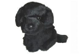 covert-camera-dog